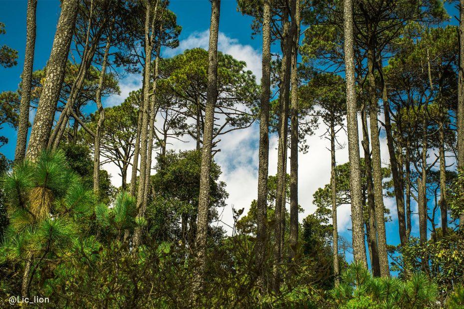 Árboles en el Cerro de las navajas, Epazoyucan, Hidalgo.