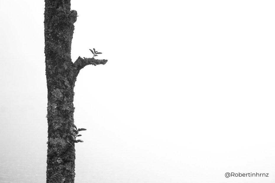 Tronco de un árbol con un fondo lleno de niebla que impide la vista.