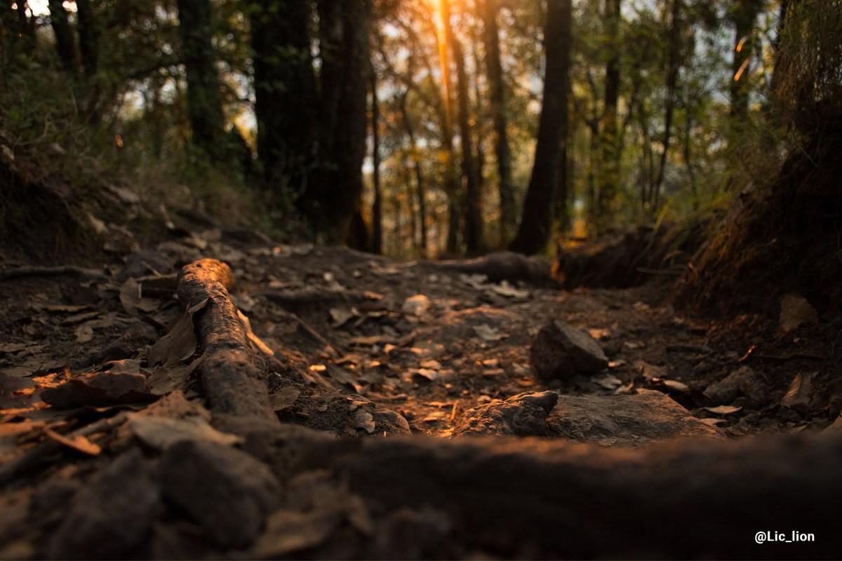 Fotografía a ras de piso en bosque de El Cedral.