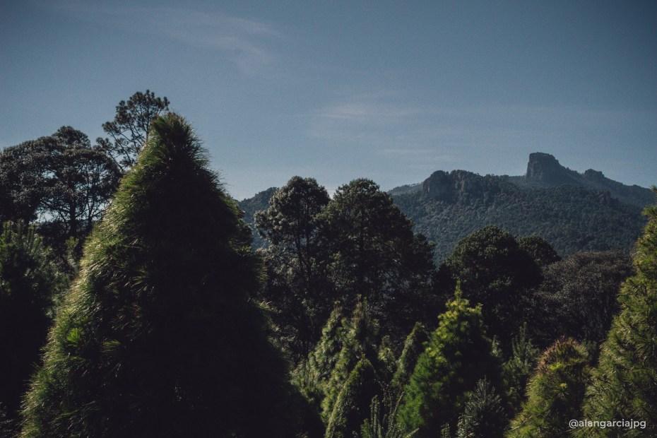 Vista de las montañas desde árboles navideños en Acopinalco del Peñón, Tlaxco, Tlaxcala.