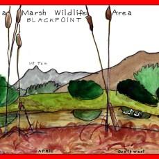 24_Petaluma_Marsh