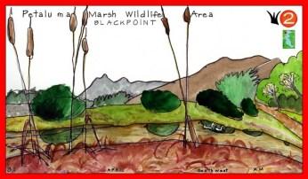 Petaluma_Marsh_Red