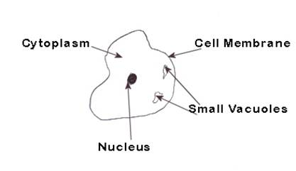 About Plant And Animal Cells Venn Diagram Graph About