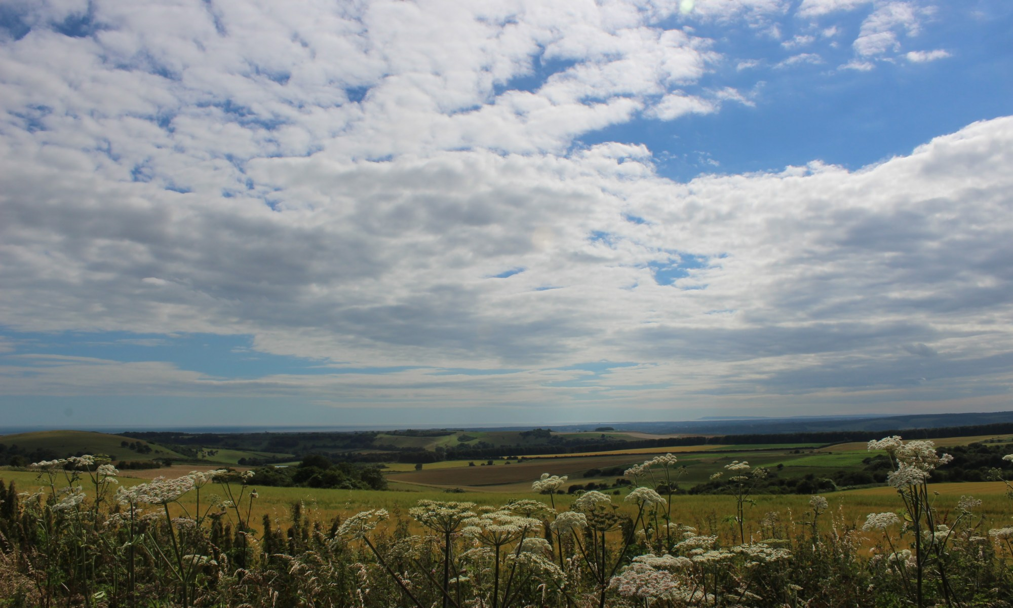 A view of the South Downs near Storrington