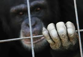 dedos de mono