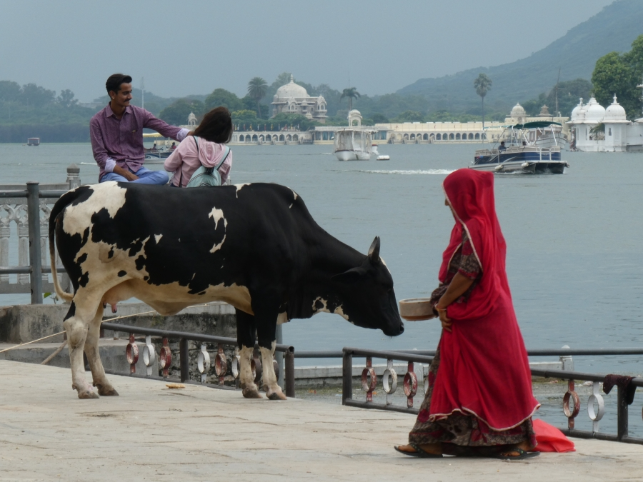 Alashan Viaggi Verona - Incredibile India