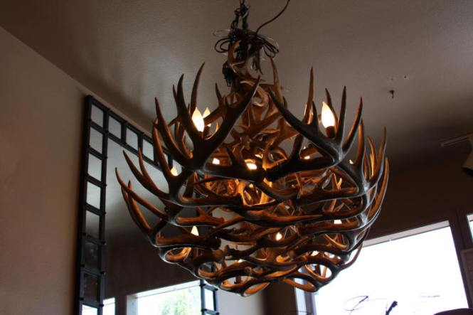 4950 Large Whitetail Antler Chandelier