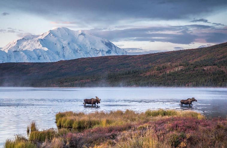 Wildlife Viewing In Denali National Park Tips From Local Experts