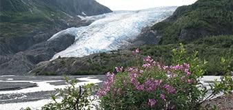 Seward Exit Glacier park