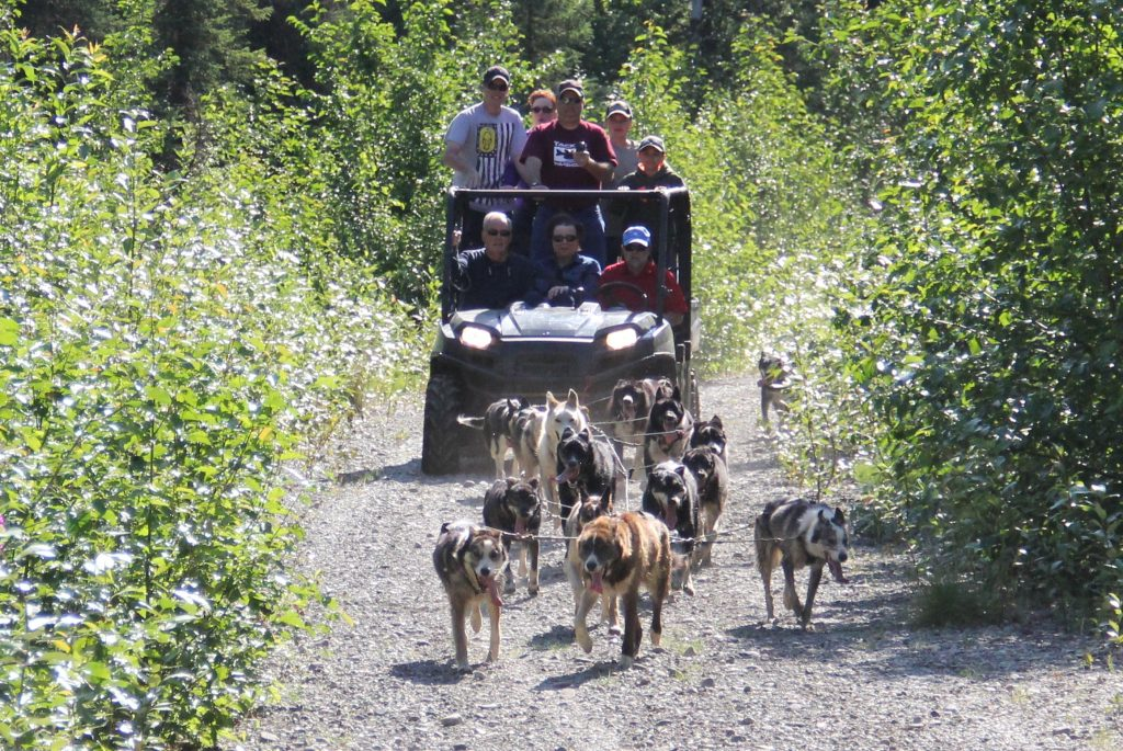 Sled dog summer ride