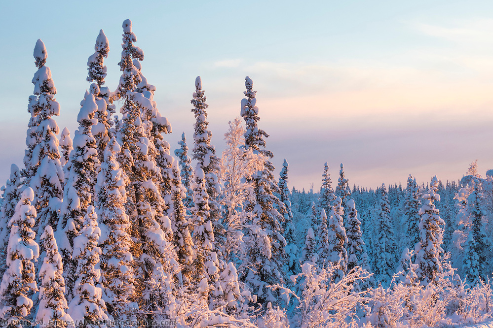 It is found in high northern latitudes, between the tundra, and the temperate forest, but there is considerable regional variation. The Boreal Forest Of Alaska