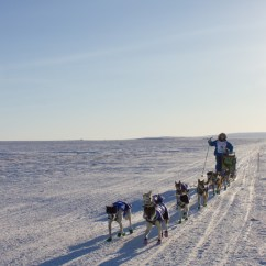 Iditarod Dog Sled Diagram 2004 Jeep Tj Wiring For Some Teams Iditarods Final Miles Make The Biggest