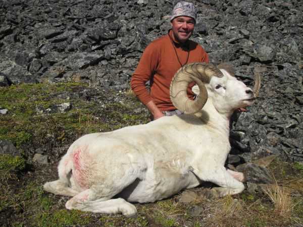 Dall Sheep Alaska Wild Wind Adventures