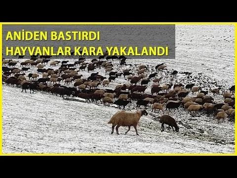 Kars'ın Yükseklerine Kar Yağdı, Çobanlar Zor Durumda Kaldı