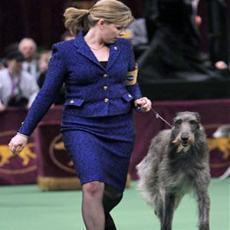 New York'un Westminster Köpek Şovu Yine Büyük İlgi Gördü