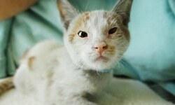 Yavru kedi aç susuz Şanghay'dan Los Angeles'a geldi