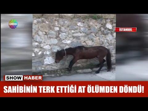 Sahibinin terk ettiği at ölümden döndü!