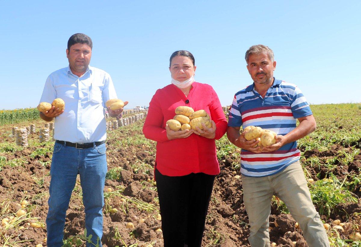 Patates üreticisi, ihracatın açılmasını istiyor