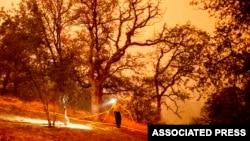California'daki Sekoya Ağaçları İçin Yangın Tehlikesi