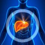 خطوات تنظيف الكبد من السموم ووقايته من الأمراض