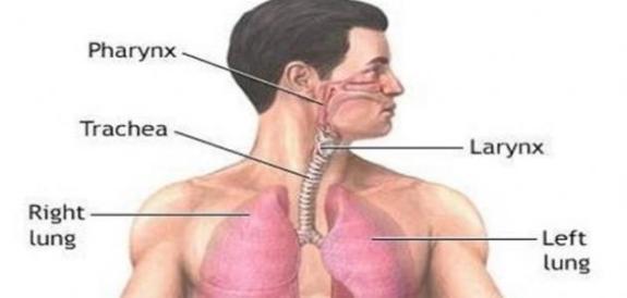 الم الصدر واسبابه .. و ارتباطه بأمراض القلب و الذبحة الصدرية