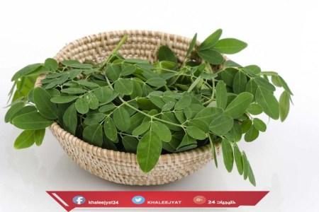 فوائد شجرة المورينجا وتأثيرها على الشعر والبشرة