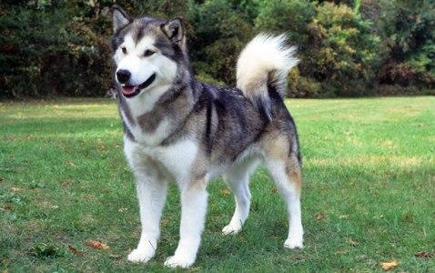 أخطر انواع الكلاب بالصور في العالم