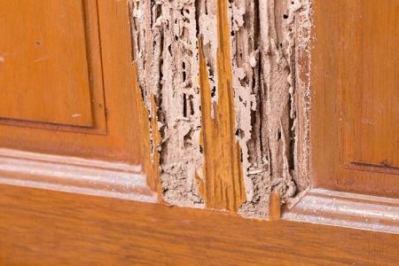 القضاء على حشرات الخشب من المنزل وخاصة دودة الخشب