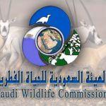 تعرف على الهيئة السعودية للحياة الفطرية تاريخ نشاتها