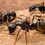 كيف اعرف نمل الحسد