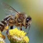 هل وجود النحل او النمل في البيت يدل على الرزق