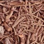 عشبة الفوة جابر القحطاني تعرف على فوائدها