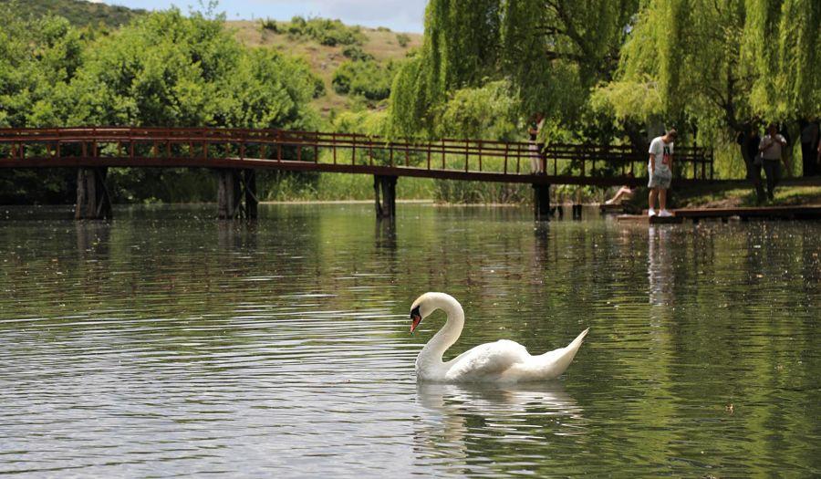 Drilon Pogradec Albania