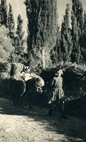 GM096: Young girl near Spileja in Himara (Photo: Giuseppe Massani, 1940).