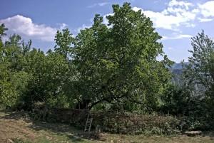 Im Nationalpark Bredhi i Hotovës-Dangell (Bild: Wikimedia Commons, Autor Malenki CC BY 3.0)