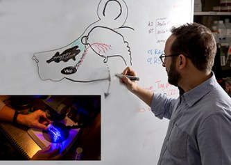 University at Albany biologist Paolo Forni draws the path of neurons from a mouse's nose to brain