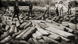 (Circa 1880-1925) Cut Cypress logs are sent upriver to the mill