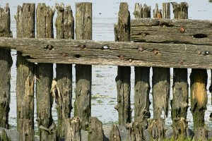 Types of Fence Rot + Proactive and Reactive Measures for Dealing With Them
