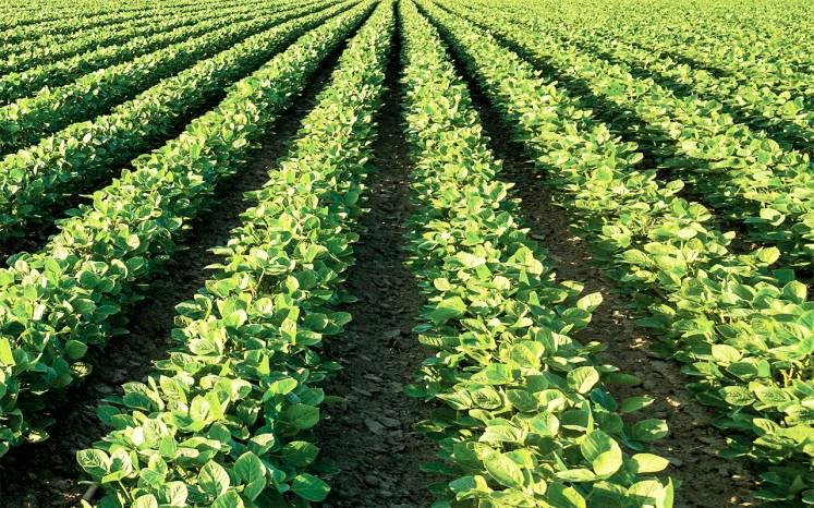 نتيجة بحث الصور عن الزراعة الحديثة