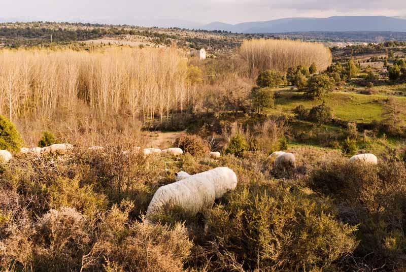 Albergue La Palaina. El entorno.