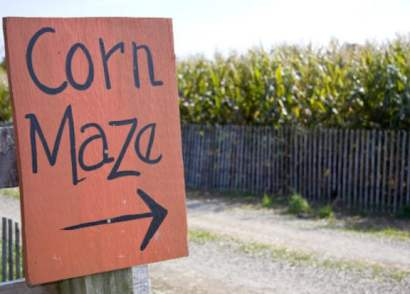 Corn mazes across Alberta