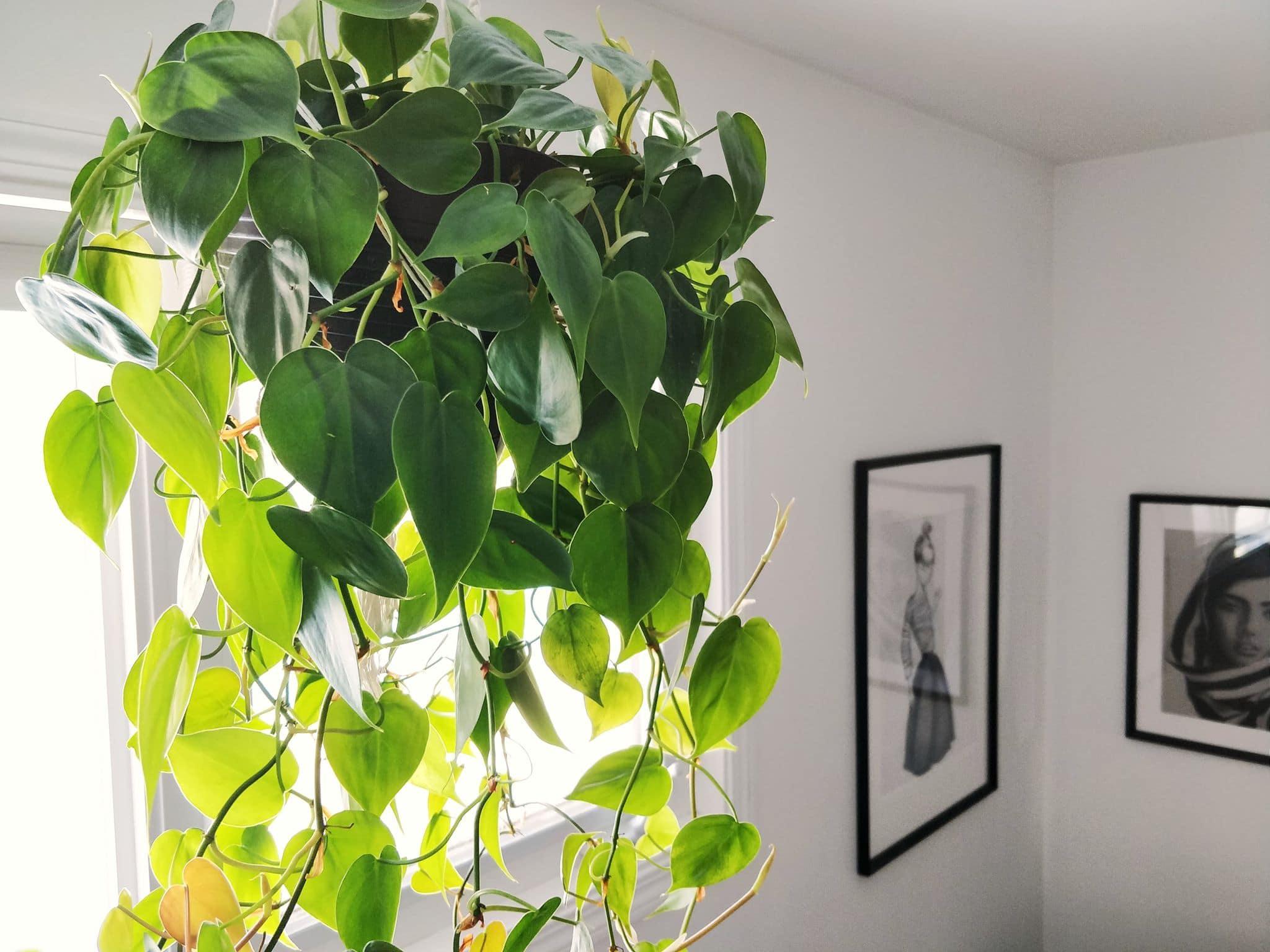 Download Why You Should Be a Plant Mom - Albertamamas.com