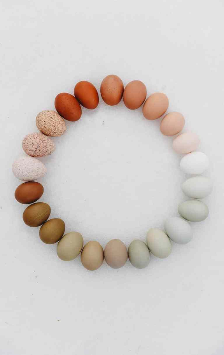 eggs of different colours