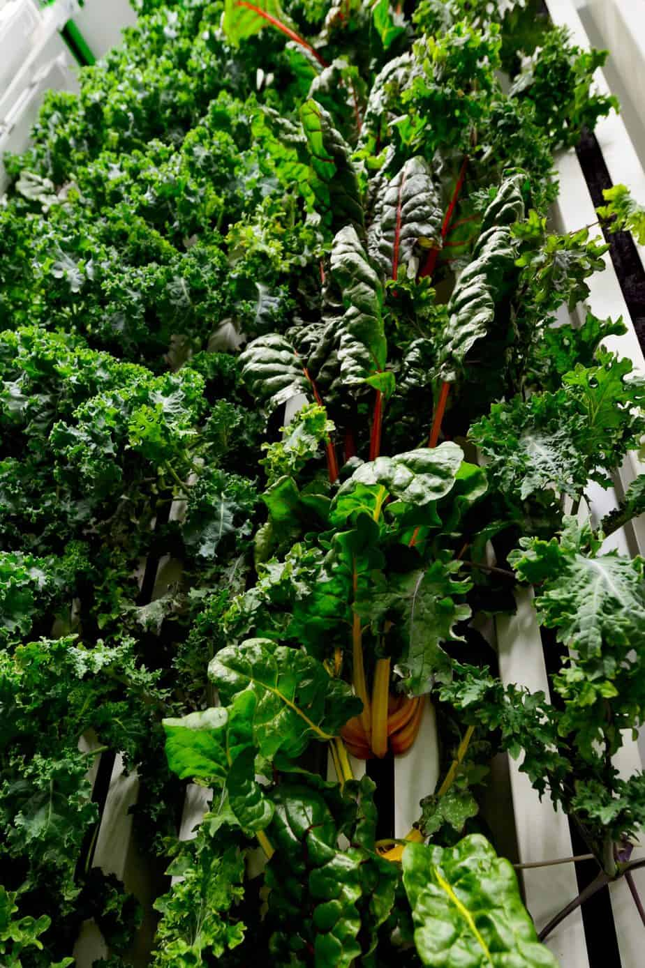 Read more about the article NuLeaf Farms