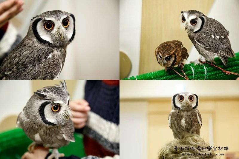 九州福岡必去.OWL Family 貓頭鷹咖啡廳(超療癒超萌可愛值爆表)