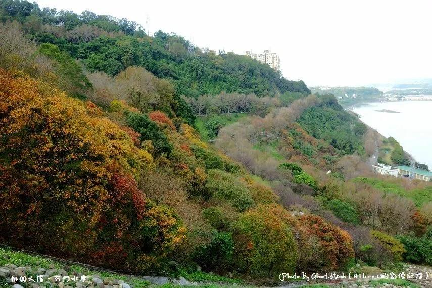 桃園石門水庫楓葉(北台灣低海拔最佳的賞楓景點,楓林步道種植千棵楓樹/槭樹超壯觀)
