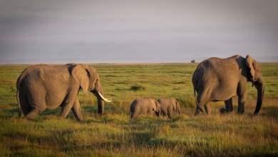 صورة الطبيعة تخسر 60 % من حيواناتها البرية خلال 44 عاما