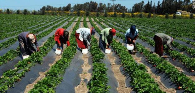 اختراع تونسي يمكّن من تعزيز نمو النباتات وتكثيف الإنتاجية