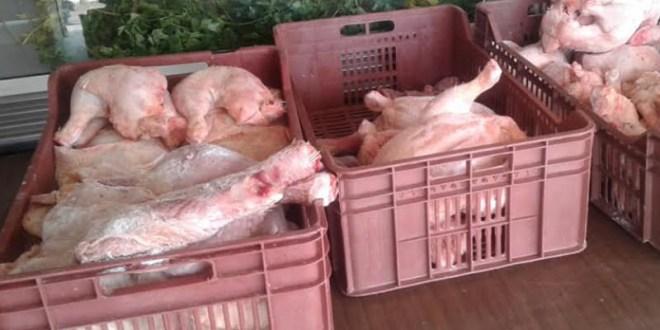 """القصرين : اتلاف أطنان من اللحوم البيضاء تحمل جرثومة """"السالمونيلا"""""""