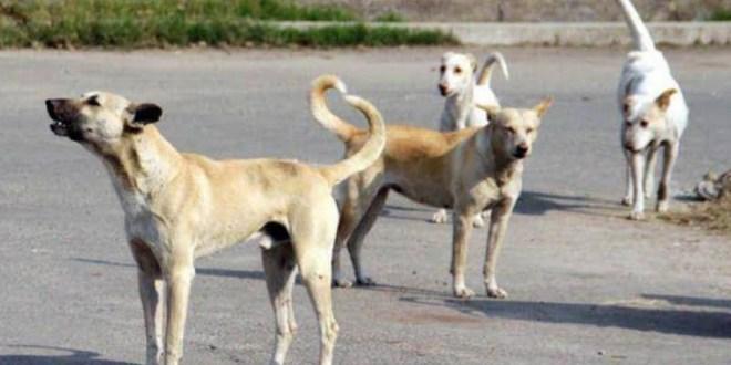 """استاذ في علم الفيروسات: الكلاب والقطط تنقل عدوى فيروس """"كورونا"""" في ما بينها لكن لا تنقلها مطلقا الى الانسان"""
